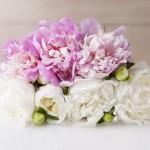 Spring Flowers: Peonies